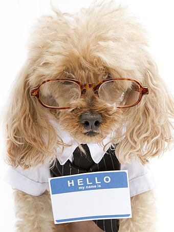 home-dog-hello